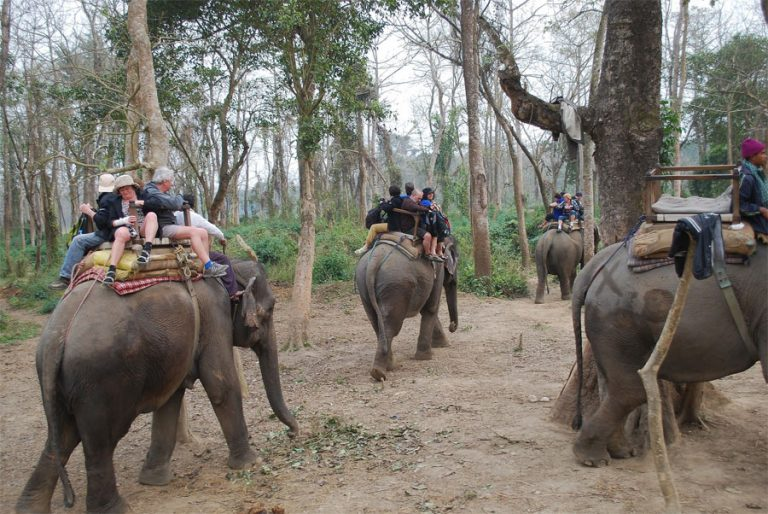 Chitwan Tour package for Nepali
